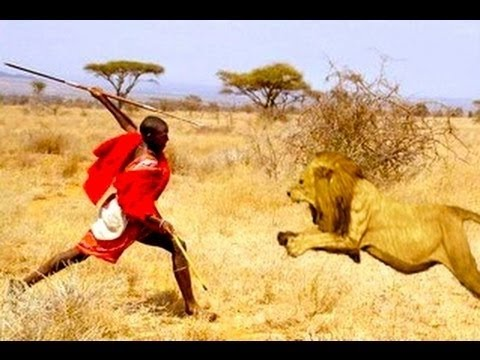 BORN TO RUNではなく、BORN TO STEAL? 人間 VS ライオン