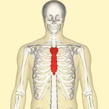 ランニングの動きは胸骨で決まる!?