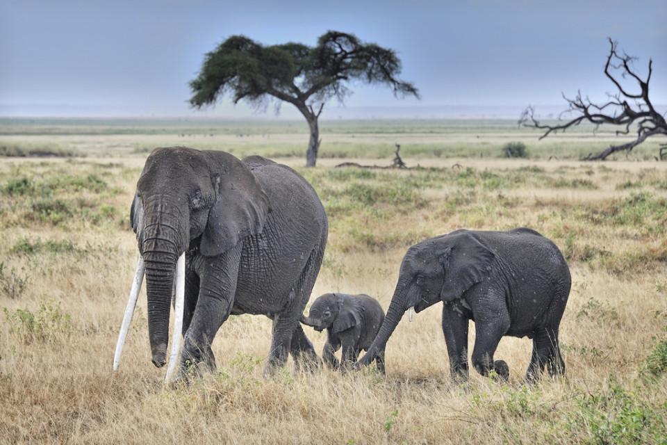いざ出陣、いよいよケニアに行って来ます!