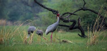 裸足ランの普及の継続   種の保存~多様性と創造性を